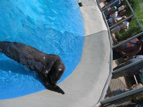 Sea Lion 2